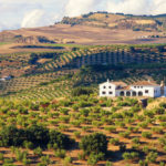 Finca for sale in Spain: What to know before you buy